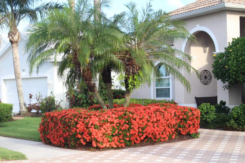 neatly manicured flowering bushes in front of a home